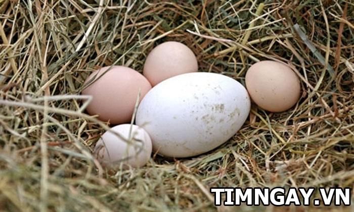 Ăn trứng ngỗng có tốt như mọi người thường nghĩ? 1