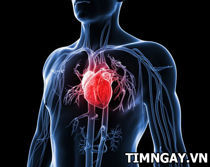 Bạn có dám khẳng định: bạn hiểu hết về nội tạng người 1