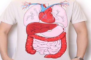 Bạn có dám khẳng định: bạn hiểu hết về nội tạng người