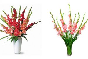 Cách cắm hoa lay ơn ngày tết đẹp đến nỗi ai nhìn cũng phải khen