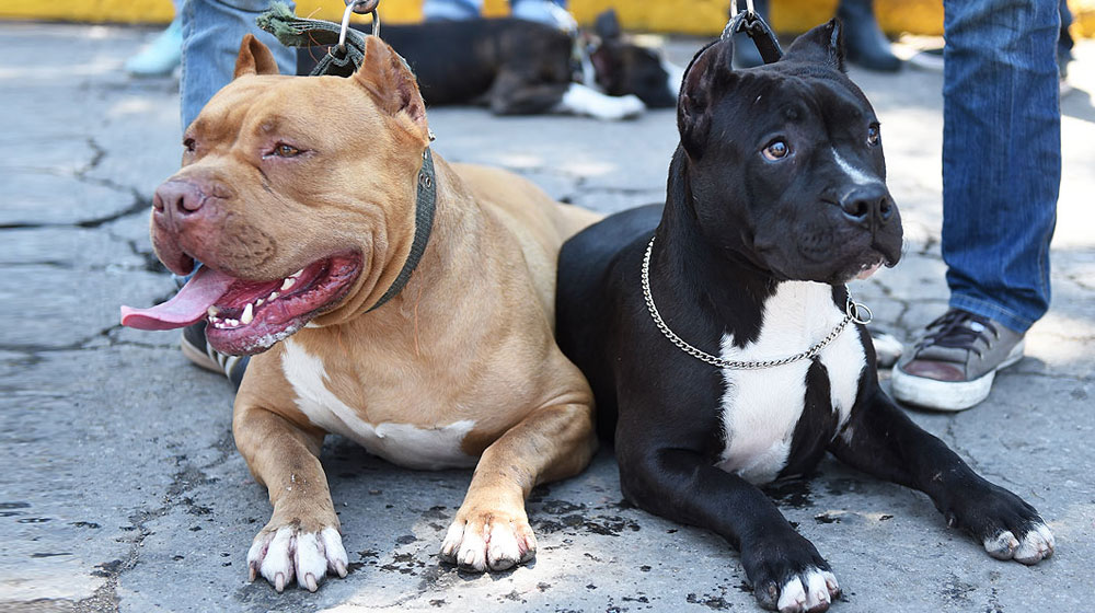 4 bí quyết huấn luyện thuần chú chó của bạn dễ dàng
