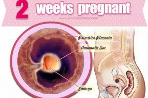 Mang thai tuần thứ 2 những thay đổi có thể thấy của bà mẹ và thai nhi trong tuần này
